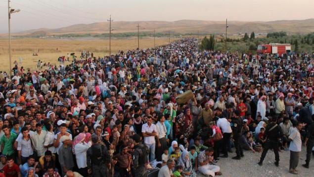 Syrian-R